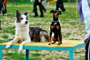 obediencia-perros-vitoria-gasteiz